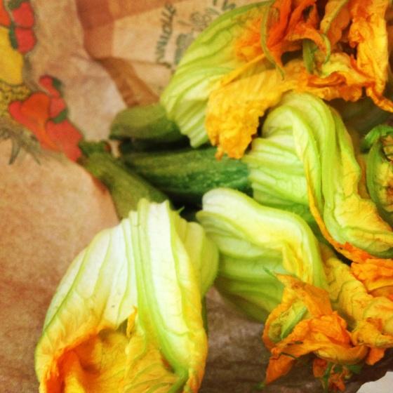 fleurs de courgette zucchini blossom